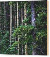 Old Growth Subalpine Aspens Wood Print