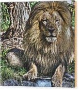 Old King Lion Wood Print