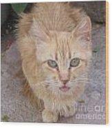 Old Kitten Wood Print