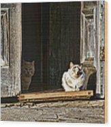 Old Knox Church Cats Wood Print
