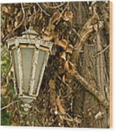 Old Lamp Hanging On Tree  Wood Print