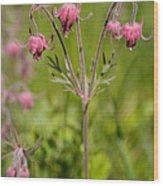 Old Man's Whiskers Wildflower Wood Print