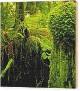 Old Mossy Stump Wood Print