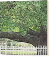 Old Oak Wood Print by Kevin Croitz