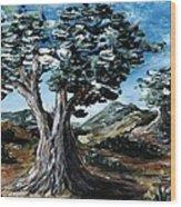 Old Olive Tree Wood Print