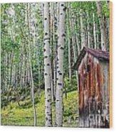 Old Outhouse Among Aspens Wood Print
