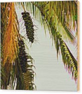 Old Palm Wood Print