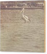 Old Pelican Photograph Wood Print