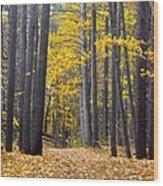 Old Pine Trees Wood Print