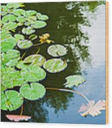 Old Pond - Featured 3 Wood Print