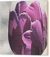 Old Purple Wood Print