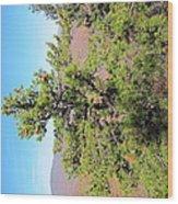 Old Rag Hiking Trail - 121225 Wood Print