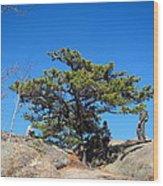 Old Rag Hiking Trail - 121238 Wood Print