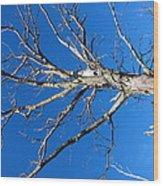 Old Rag Hiking Trail - 121241 Wood Print