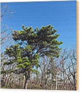 Old Rag Hiking Trail - 121242 Wood Print by DC Photographer