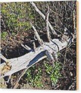 Old Rag Hiking Trail - 121243 Wood Print