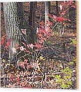 Old Rag Hiking Trail - 12125 Wood Print