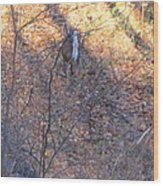 Old Rag Hiking Trail - 121264 Wood Print