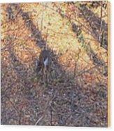 Old Rag Hiking Trail - 121265 Wood Print