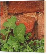 Old Red Wall Wood Print