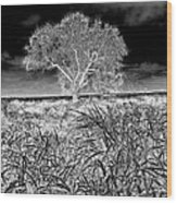 Old Texas Fields Wood Print