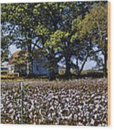 Old Time Farm And Cotton Fields Wood Print