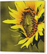 Old Time Sunflower Wood Print