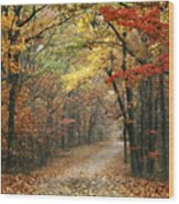 Old Trace Fall - Along The Natchez Trace In Tennessee Wood Print