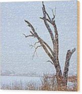 Old Tree In Winter Wood Print