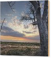 Old Tree Sunset Over Oyster Bay Wood Print