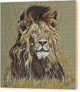 Old Warrior African Lion Wood Print by Mary Dove