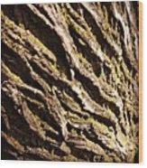 Old Weathered Trees Wood Print