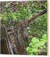 Old Wheelbarrow In The Weeds Wood Print
