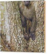 Olive Baboon Juvenile Kibale Np Uganda Wood Print