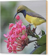 Olive-backed Sunbird Male With Flower Wood Print