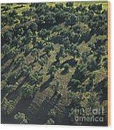 Olive Farmland In Spain Wood Print