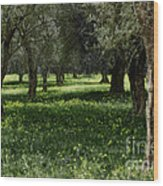 Olive Grove Color Italy Wood Print