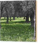 Olive Grove Italy Cbw Wood Print
