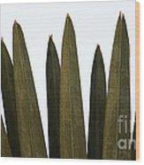 Olive Palm Wood Print