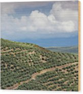 Olive Trees In A Field, Ubeda, Jaen Wood Print