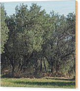 Olive Trees Of Provence Wood Print