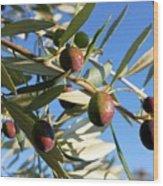 Olives (olea Europaea) On A Tree Wood Print