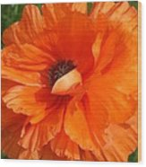 Olympia Orange Poppy Wood Print