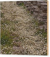 Olympia Ruins And Wild Flowers   #9679 Wood Print