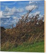 On Beachy Head Plants Bow To The Wind Wood Print