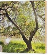 On Blackburne Farm Wood Print