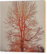 On Fire In The Fog Wood Print by Lois Bryan