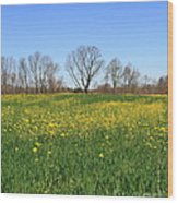 On Golden Field Wood Print