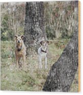 On Guard - Featured In Comfortable Art Group Wood Print