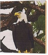 On His Perch Wood Print